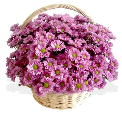 mini jardins orientais:Pink Baskets